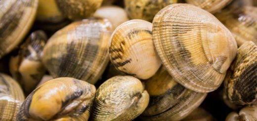 Come far spurgare le vongole
