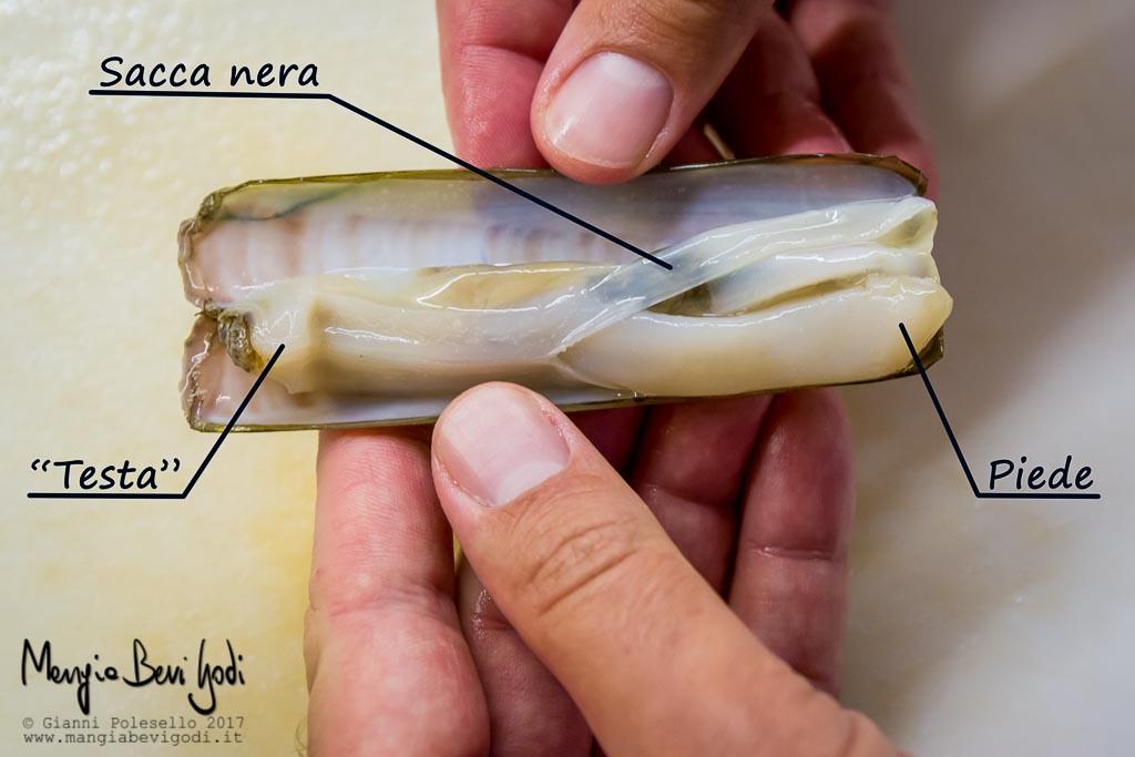 Morfologia del cannolicchio (Piede, sacca nera, testa e sifoni)